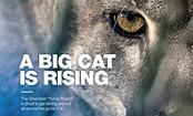 A big cat is rising/Klabin S.A.
